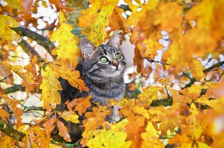 Beautiful kitty sitting on the autumn tree