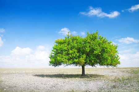 torrid: drought. death field and green tree Stock Photo