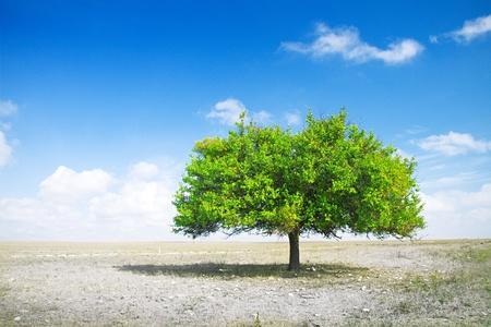 sequias: la sequía. la muerte de campo y el árbol verde Foto de archivo
