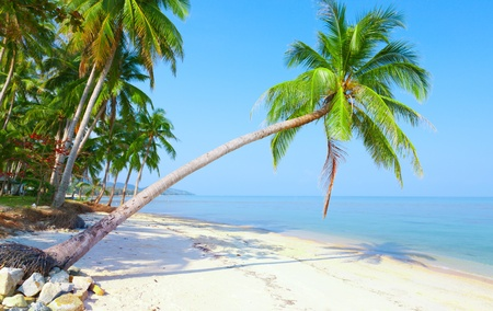 tropisch strand met kokospalm. Bang Po beach, Koh Samui, Thailand Stockfoto