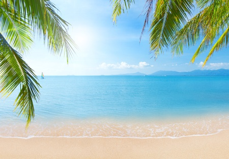 Palm and tropical beach Stock Photo - 11944348