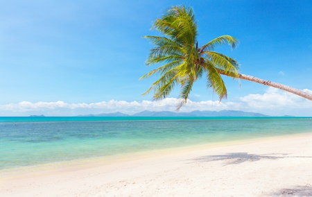 Samui: beautiful tropical beach with coconut palm Stock Photo