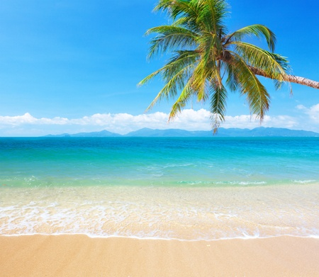tropisch strand met kokospalm