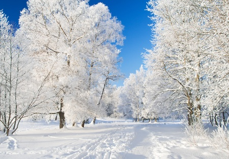 sleet: Winter park in snow