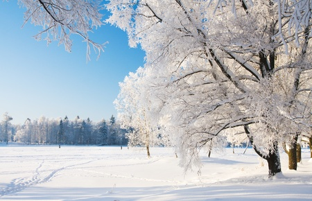 Winter park in snow