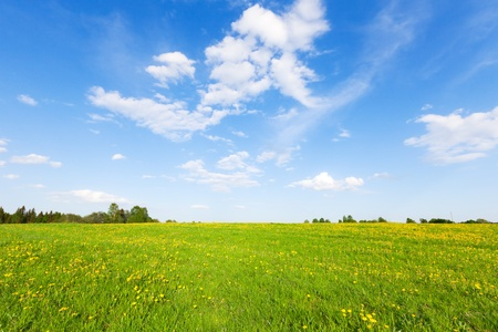 Green field with flowers under blue cloudy sky Stock Photo - 11944376