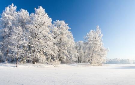 snow scenes: Winter park
