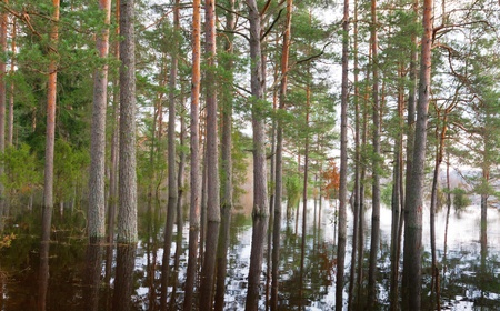 Forest in spring water  photo