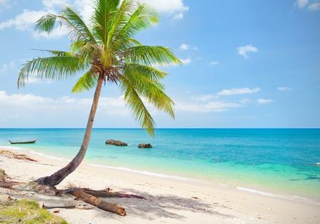 plage tropicale avec palmiers de noix de coco. Koh Lanta, Thaïlande