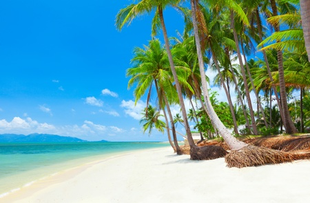 tropical beach with coconut palm trees. Koh Samui, Thailand Stock Photo