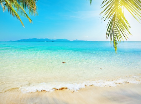 Palm leaf and tropical beach photo
