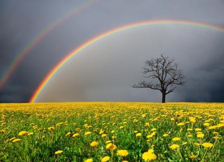 タンポポのフィールドと虹と曇り空の下で死んだ木