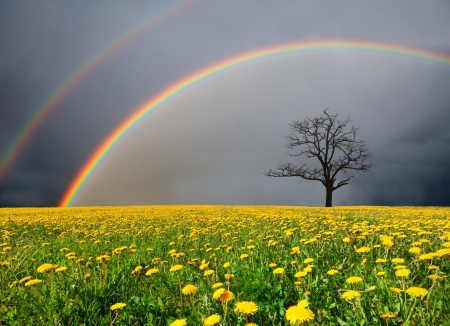 dandelion field and dead tree under cloudy sky with rainbow Фото со стока