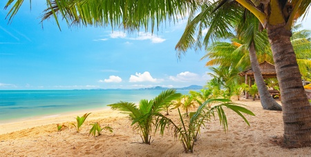 panoramic tropical beach with coconut palm. Koh Samui, Thailand, Maenam beach