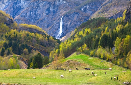pasture with sheep and beautiful waterfall photo