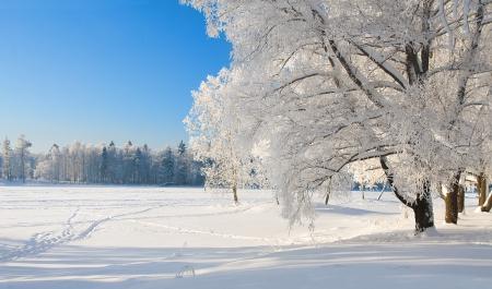 winter field: Winter park in snow