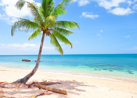 beautiful beach with coconut palm photo
