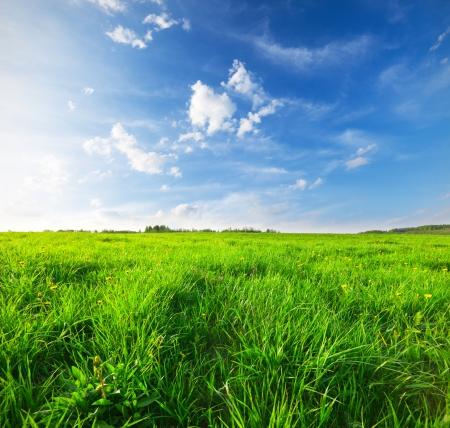 Green field under blue sky Stock Photo - 17675937