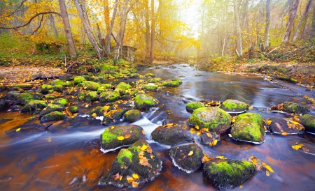 river in autumn forest photo
