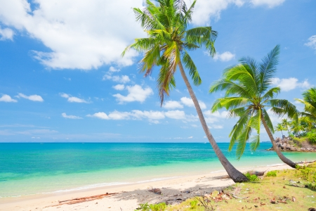 panoramic beach: tropical beach with coconut palm Stock Photo
