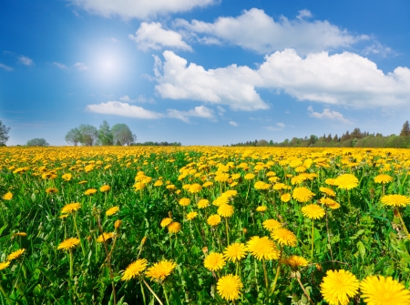 horizon over land: Yellow flowers hill under blue cloudy sky