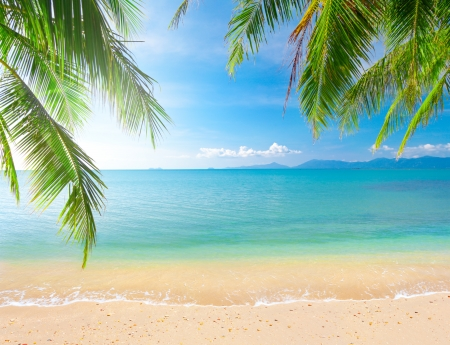coconut tree: Palm and tropical beach
