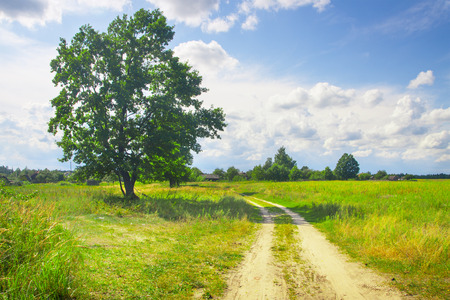 beautiful green tree on field with dirt road