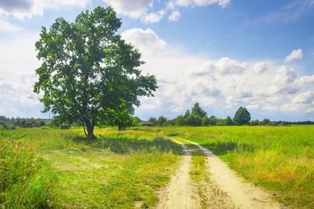 mooie groene boom op gebied met onverharde weg Stockfoto