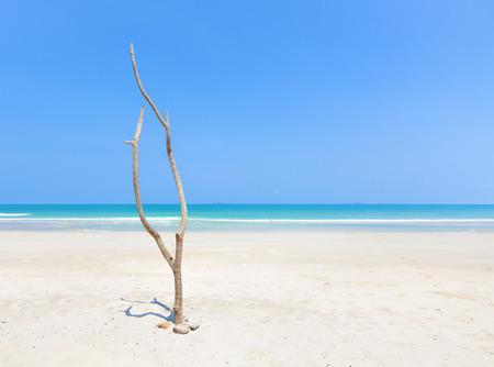 Dead tree on beautiful beach photo