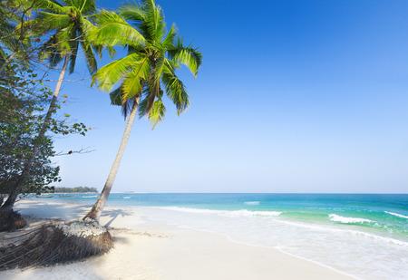 cielo y mar: beaautiful playa con palmeras de coco y el mar