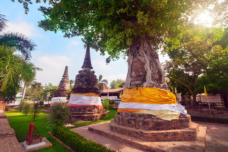ayutthaya: Tree covers ancient pagodas at Wat Na Phra Men