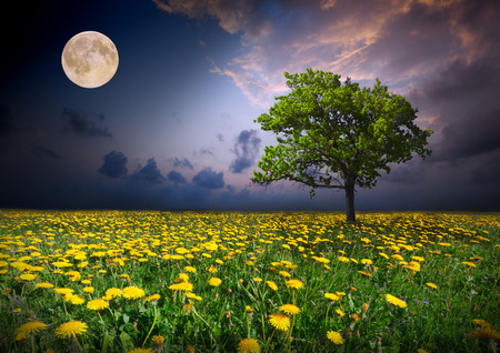 old moon: Night and the moon on a yellow flowers field Stock Photo