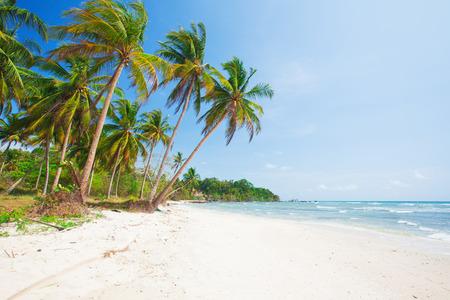 palmeras: playa tropical con palmeras de coco y el mar