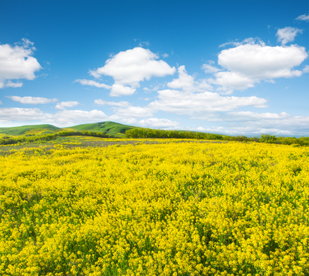 blue cloudy sky: Green field with flowers under blue cloudy sky