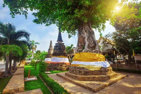 na: Tree covers ancient pagodas at Wat Na Phra Men