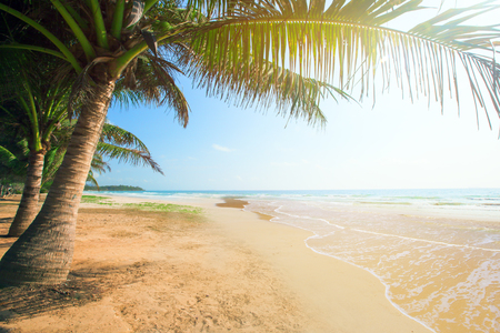 beach with coconut palm and sea at sunset time Stock Photo