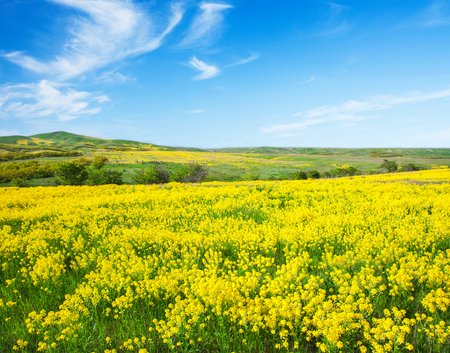 campo de flores: Campo verde con flores bajo el cielo nublado azul
