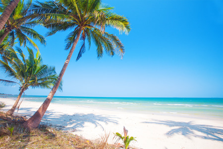 tropical beach with coconut palm Stockfoto