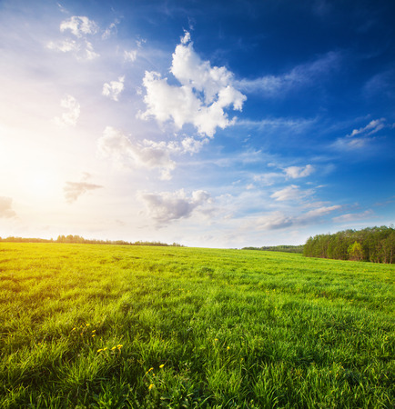 blue sky: green field and beautiful sunset Stock Photo