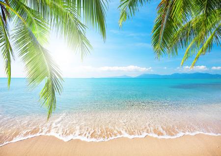 beach palm: Palm and tropical beach