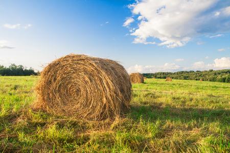 bales: hay bales in a field