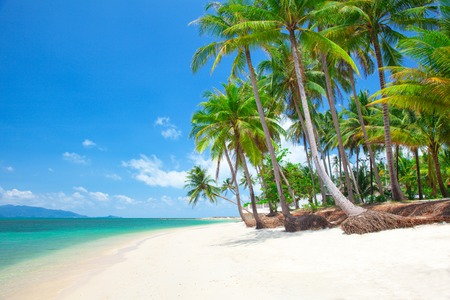 caribbean beach: tropical beach with coconut palm Stock Photo