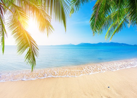 tropic: Palm and tropical beach