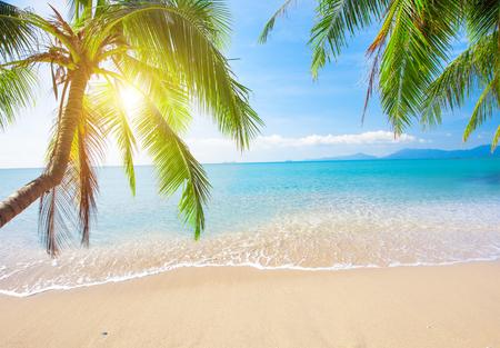 Palm i tropikalna plaża