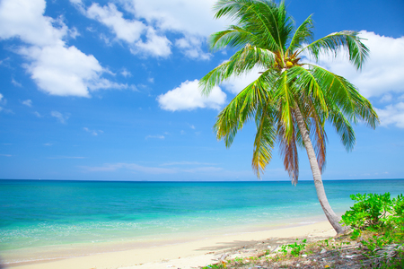 tropical beach with coconut palm 写真素材