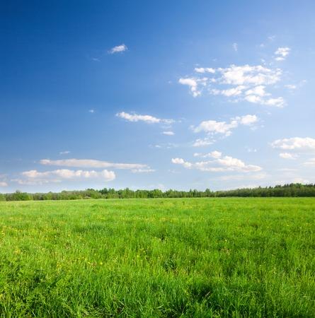 青空: 青い曇り空の下で花と緑のフィールド