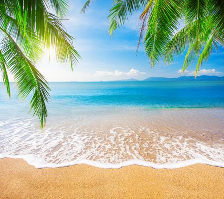 종려 나무와 열대 해변 스톡 콘텐츠