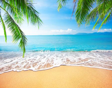 Palm et plage tropicale Banque d'images - 71245002