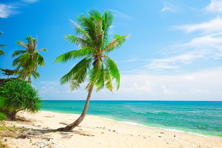 hotel building: tropical beach with coconut palm Stock Photo