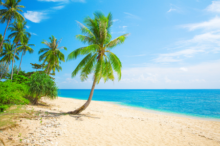 tropical beach with coconut palm Stock Photo